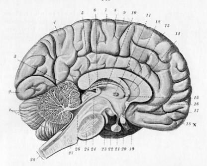 lillehjernen og balanse